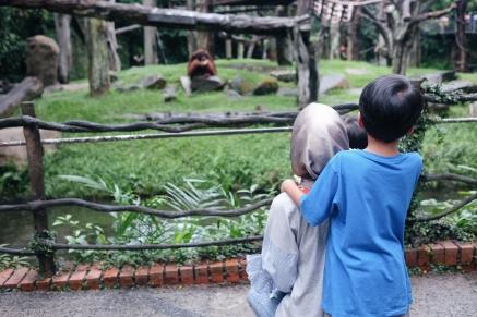 Melihat Orangutan di Singapore Zoo